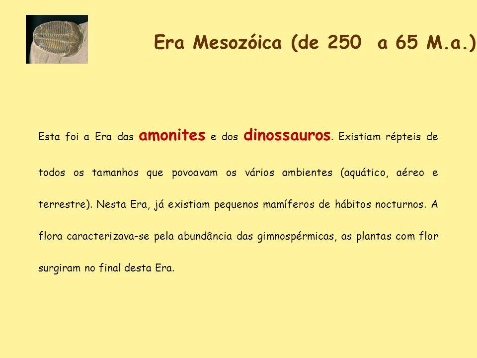 Era Mesozóica (de 250 a 65 M.a.) Esta foi a Era das amonites e dos dinossauros. Existiam répteis de todos os tamanhos que povoavam os vários ambientes
