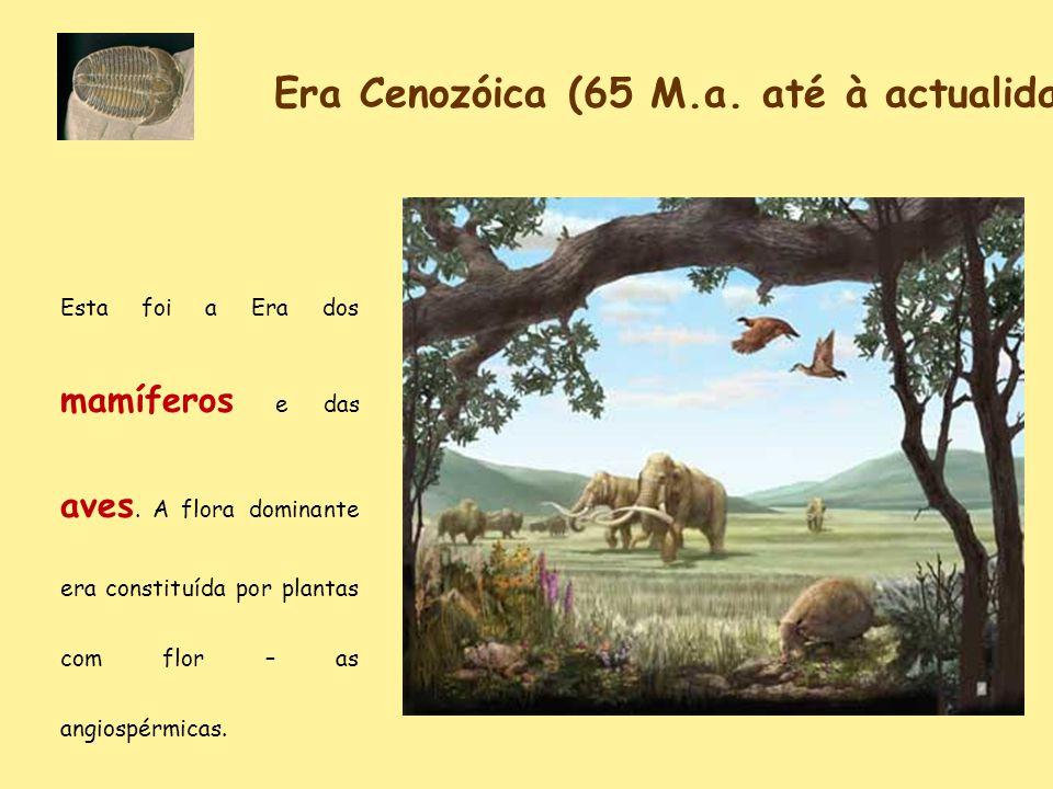 Era Cenozóica (65 M.a. até à actualidade) Esta foi a Era dos mamíferos e das aves. A flora dominante era constituída por plantas com flor – as angiosp