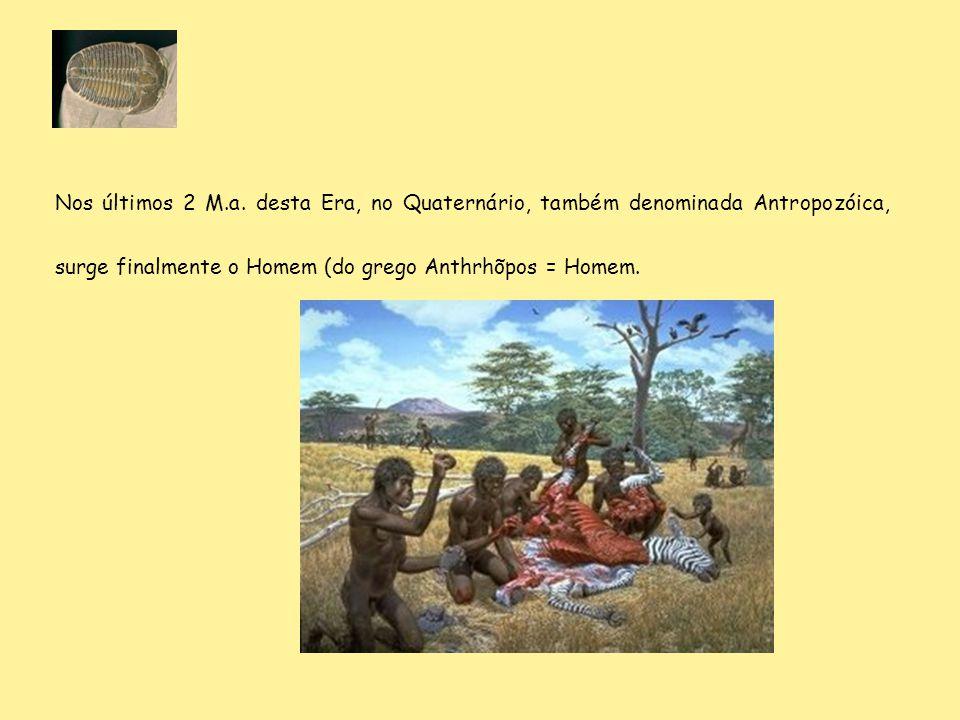 Nos últimos 2 M.a. desta Era, no Quaternário, também denominada Antropozóica, surge finalmente o Homem (do grego Anthrhõpos = Homem.