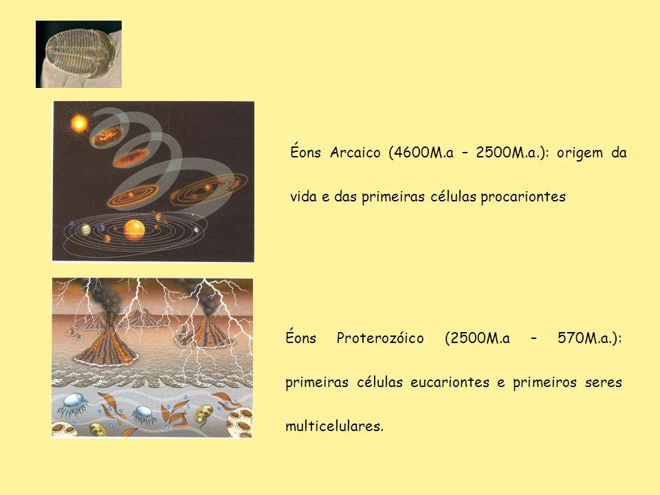 Éons Proterozóico (2500M.a – 570M.a.): primeiras células eucariontes e primeiros seres multicelulares. Éons Arcaico (4600M.a – 2500M.a.): origem da vi
