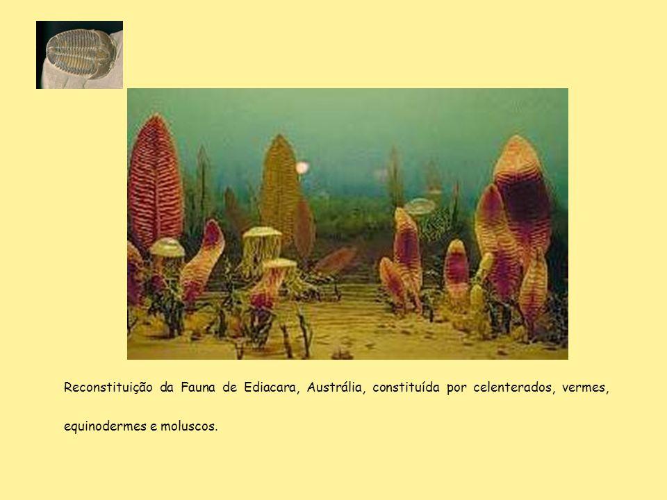 Reconstituição da Fauna de Ediacara, Austrália, constituída por celenterados, vermes, equinodermes e moluscos.