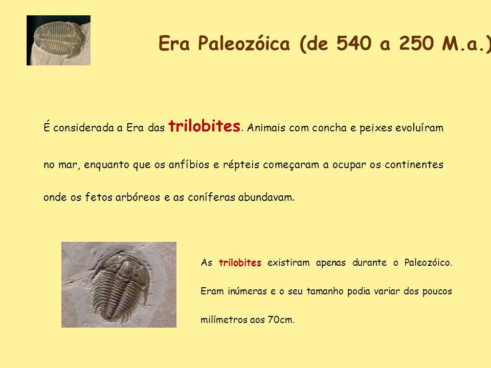 Era Paleozóica (de 540 a 250 M.a.) É considerada a Era das trilobites. Animais com concha e peixes evoluíram no mar, enquanto que os anfíbios e réptei