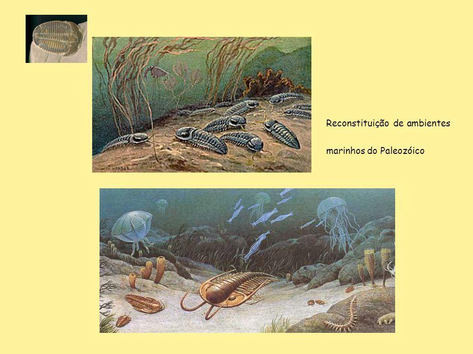 Reconstituição de ambientes marinhos do Paleozóico