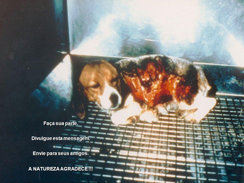 Dr. Ivo Pitangui Com relação à experimentação animal, existiram muitos abusos que não trouxeram e não trazem, infelizmente, benefícios para nós. O ser