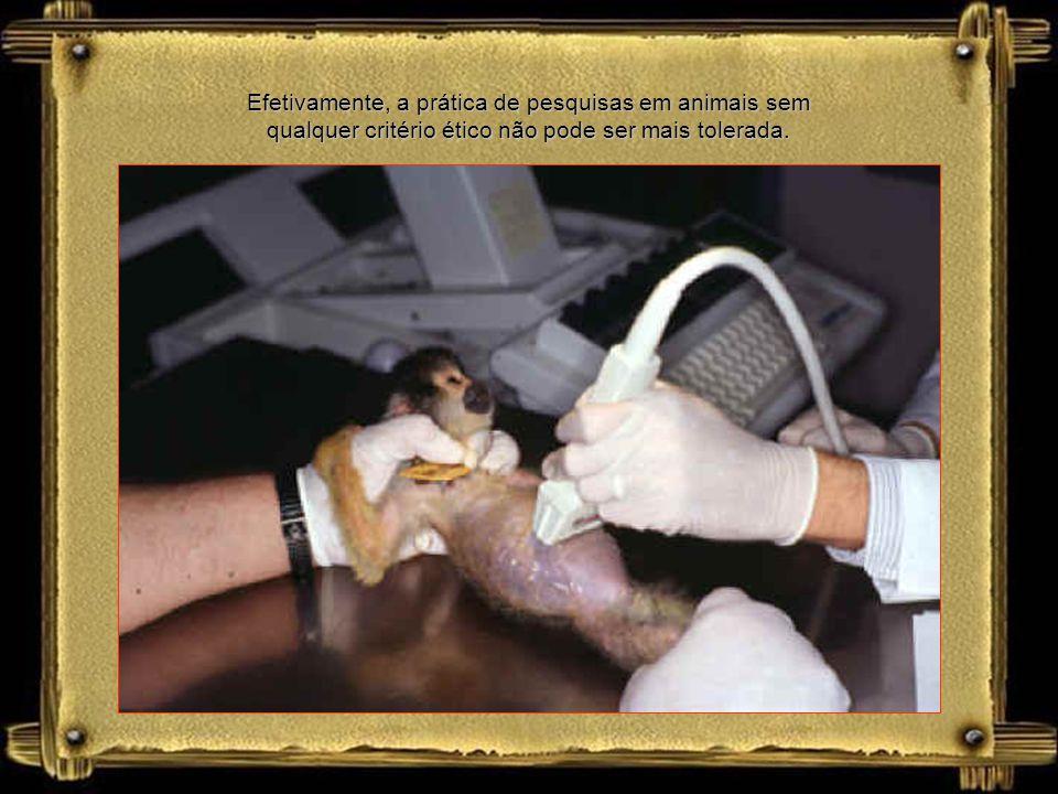 h) o desenvolvimento de procedimentos com animais, assegurando-lhes sedação, analgesia ou anestesia, quando se configurar o desencadeamento de dor ou