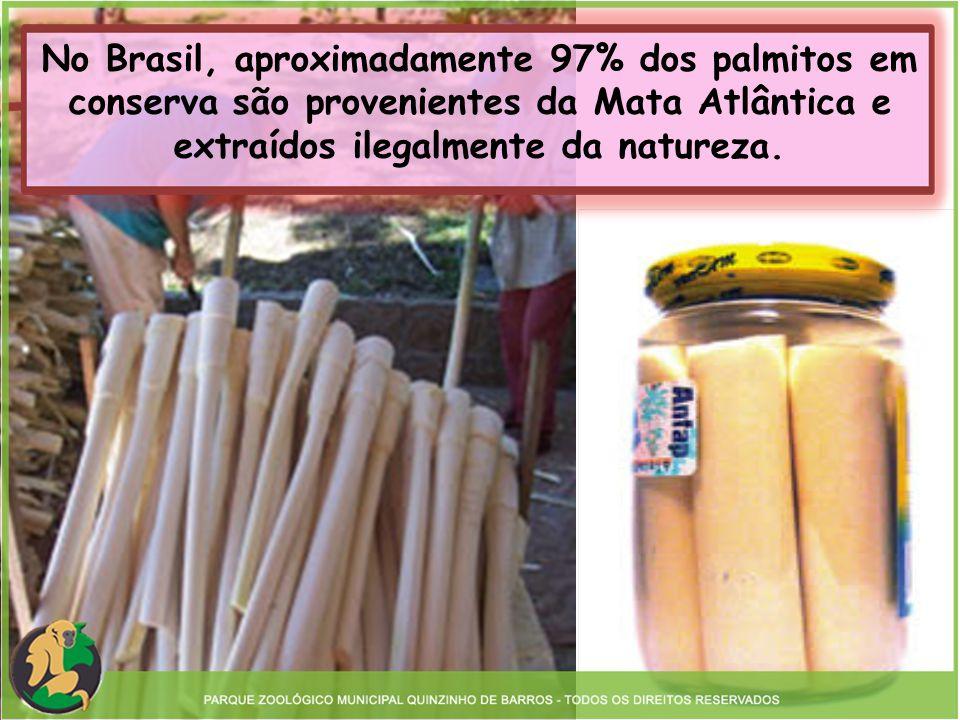 Estima-se que pelo menos 43 toneladas de palmito-juçara são retirados anualmente no Estado de São Paulo.