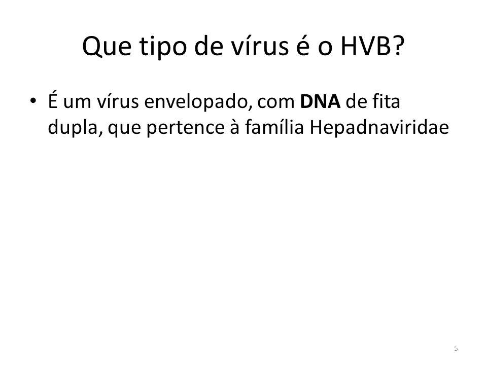 Que tipo de vírus é o HVB.