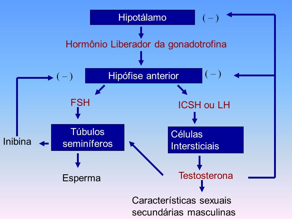 Hipotálamo Hormônio Liberador da gonadotrofina Hipófise anterior FSH LH Ovários Estrogênios Deposição de gordura das coxas e nádegas ( – ) Inibina ( – ) Desenvolv.das mamas Desenvolv.