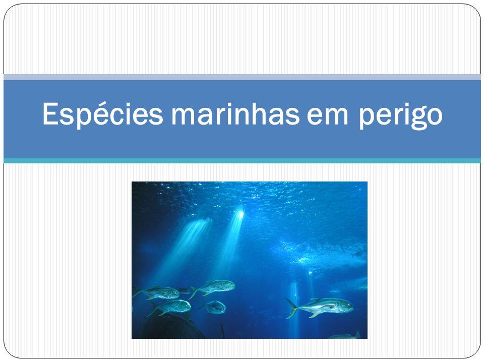 Espécies marinhas em perigo