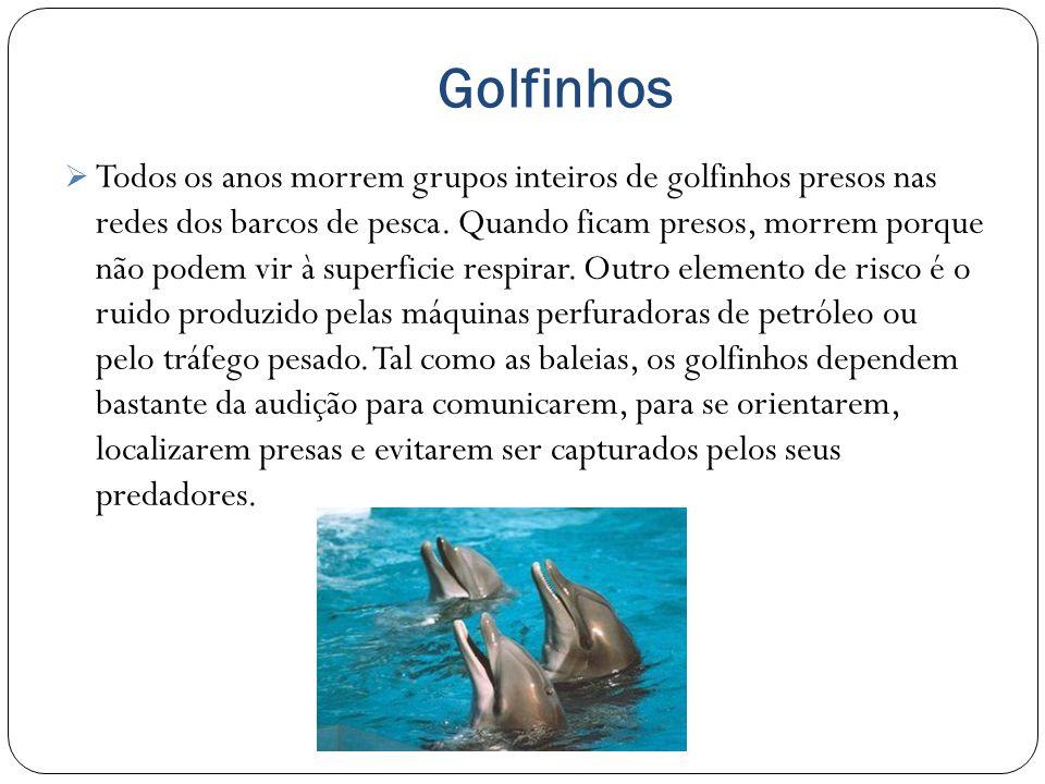Golfinhos Todos os anos morrem grupos inteiros de golfinhos presos nas redes dos barcos de pesca.
