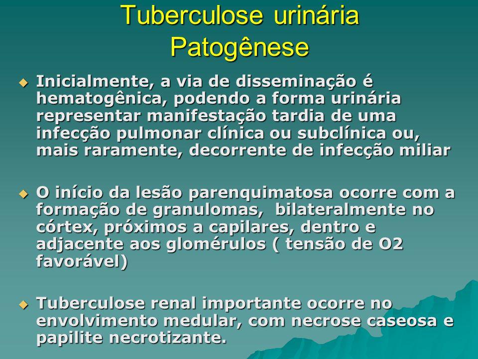 Tuberculose urinária Patogênese Inicialmente, a via de disseminação é hematogênica, podendo a forma urinária representar manifestação tardia de uma infecção pulmonar clínica ou subclínica ou, mais raramente, decorrente de infecção miliar Inicialmente, a via de disseminação é hematogênica, podendo a forma urinária representar manifestação tardia de uma infecção pulmonar clínica ou subclínica ou, mais raramente, decorrente de infecção miliar O início da lesão parenquimatosa ocorre com a formação de granulomas, bilateralmente no córtex, próximos a capilares, dentro e adjacente aos glomérulos ( tensão de O2 favorável) O início da lesão parenquimatosa ocorre com a formação de granulomas, bilateralmente no córtex, próximos a capilares, dentro e adjacente aos glomérulos ( tensão de O2 favorável) Tuberculose renal importante ocorre no envolvimento medular, com necrose caseosa e papilite necrotizante.