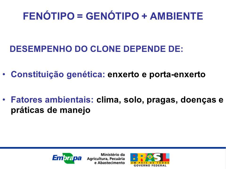 DESEMPENHO DO CLONE DEPENDE DE: Constituição genética: enxerto e porta-enxerto Fatores ambientais: clima, solo, pragas, doenças e práticas de manejo F