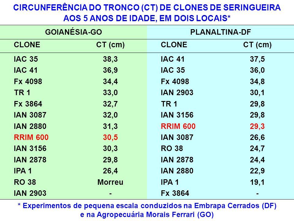 CIRCUNFERÊNCIA DO TRONCO (CT) DE CLONES DE SERINGUEIRA AOS 5 ANOS DE IDADE, EM DOIS LOCAIS* GOIANÉSIA-GOPLANALTINA-DF CLONECT (cm) CLONECT (cm) IAC 35