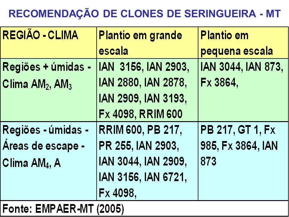 RECOMENDAÇÃO DE CLONES DE SERINGUEIRA - MT