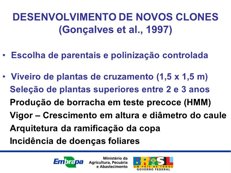 Escolha de parentais e polinização controlada Viveiro de plantas de cruzamento (1,5 x 1,5 m) Seleção de plantas superiores entre 2 e 3 anos Produção d