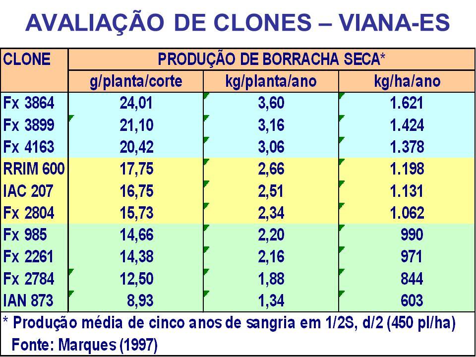 AVALIAÇÃO DE CLONES – VIANA-ES