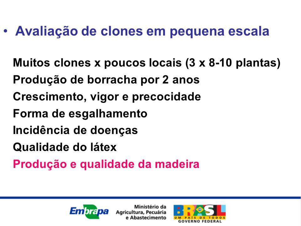 Muitos clones x poucos locais (3 x 8-10 plantas) Produção de borracha por 2 anos Crescimento, vigor e precocidade Forma de esgalhamento Incidência de