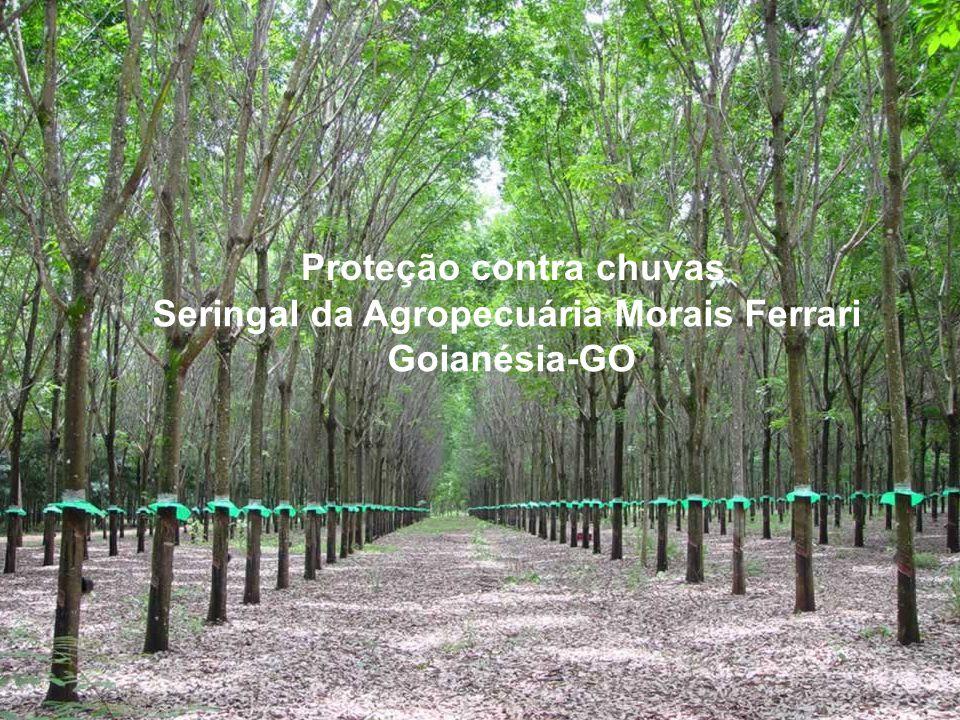 Seringal da Agropecuária Morais Ferrari Goianésia-GO Proteção contra chuvas