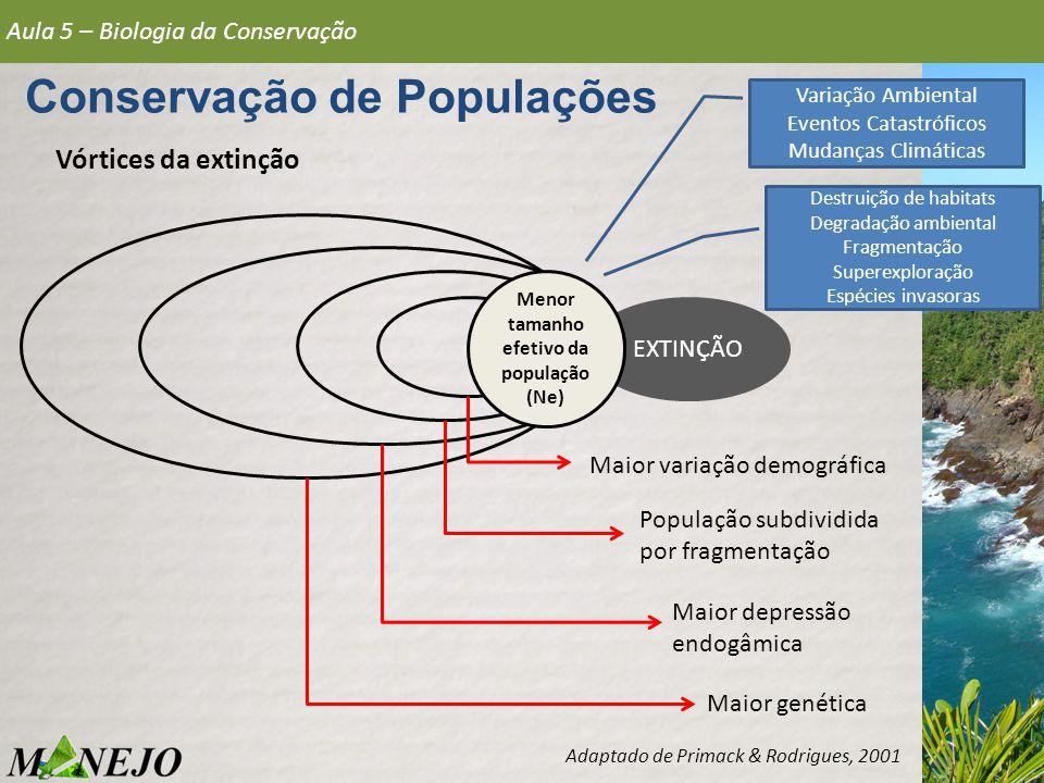 EXTINÇÃO Vórtices da extinção Aula 5 – Biologia da Conservação Conservação de Populações Adaptado de Primack & Rodrigues, 2001 Menor tamanho efetivo d
