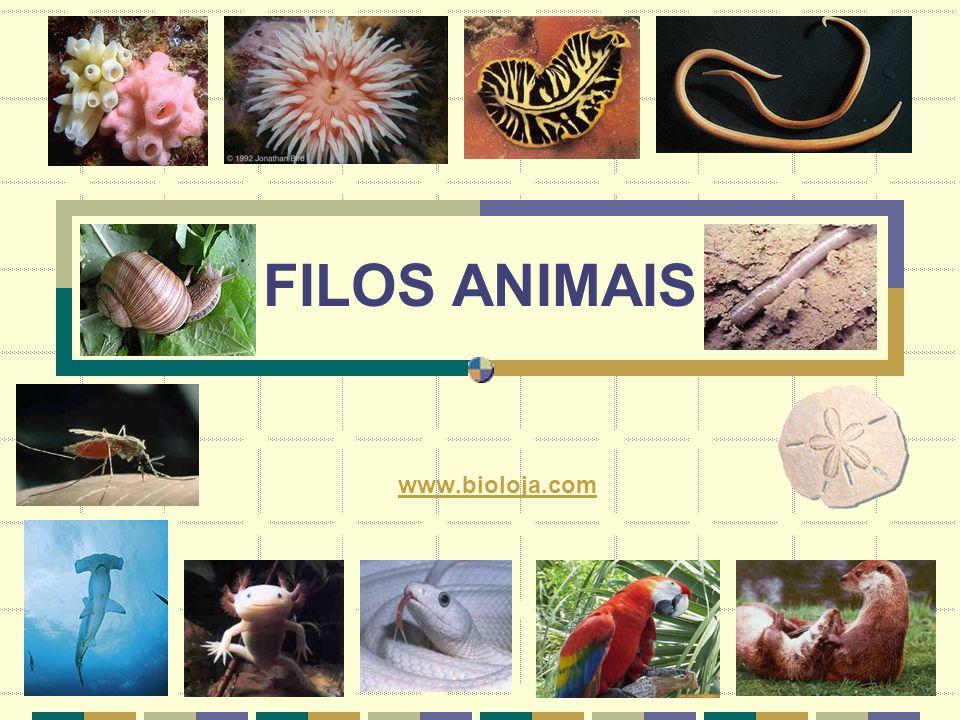 FILOS ANIMAIS www.bioloja.com