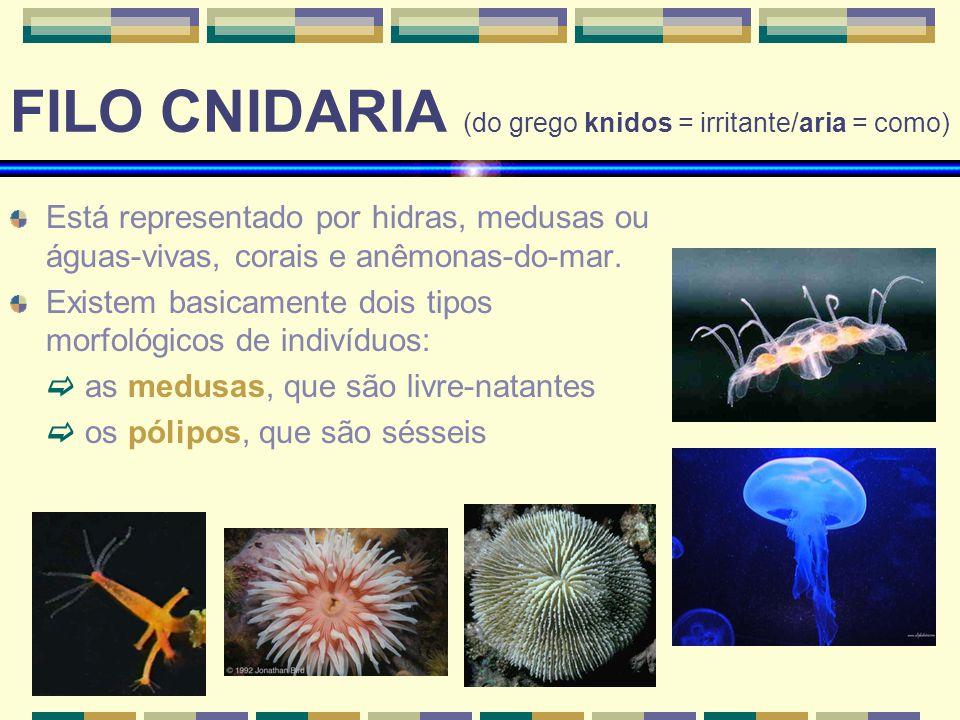 FILO CNIDARIA (do grego knidos = irritante/aria = como) Está representado por hidras, medusas ou águas-vivas, corais e anêmonas-do-mar.
