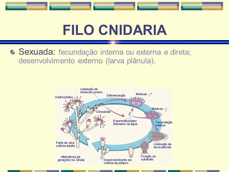 www.bioloja.com FILO CNIDARIA Sexuada: fecundação interna ou externa e direta; desenvolvimento externo (larva plânula).