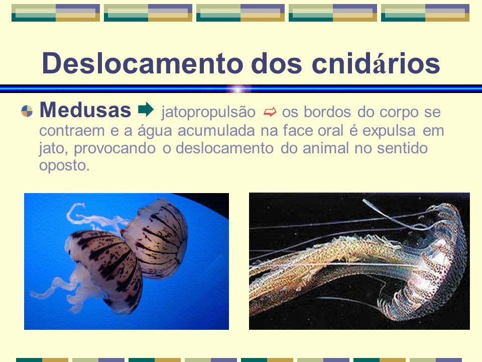 Deslocamento dos cnid á rios Medusas jatopropulsão os bordos do corpo se contraem e a água acumulada na face oral é expulsa em jato, provocando o deslocamento do animal no sentido oposto.