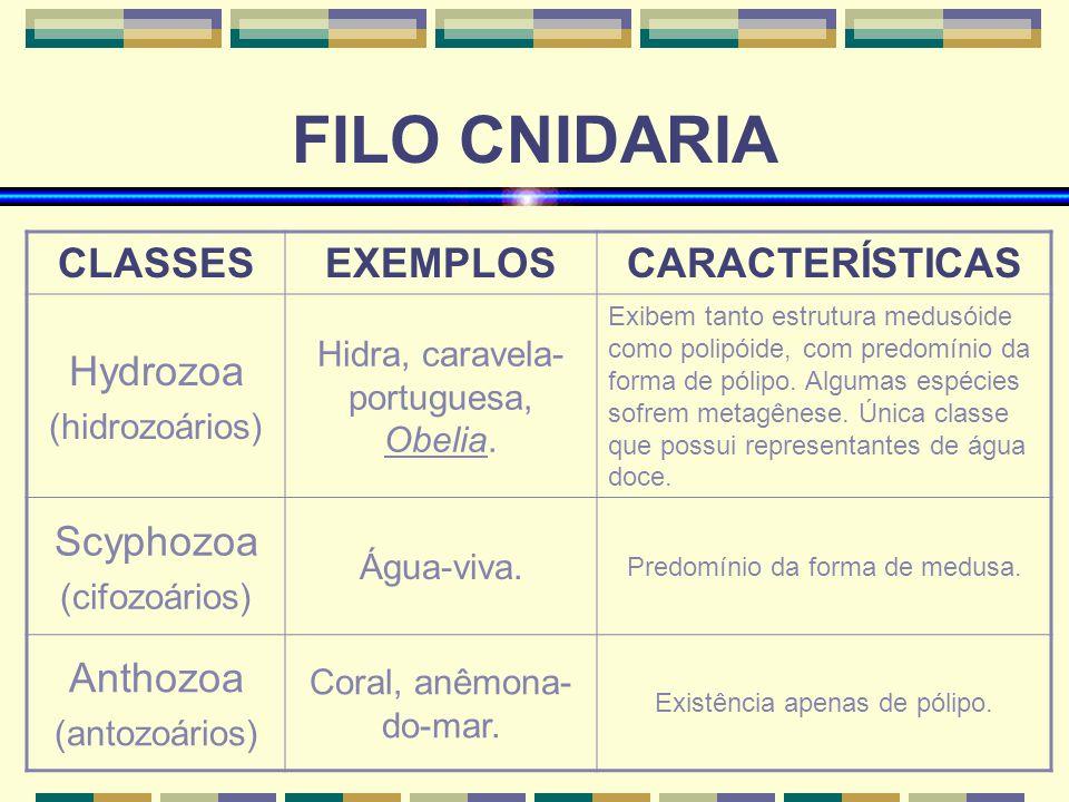 FILO CNIDARIA CLASSESEXEMPLOSCARACTERÍSTICAS Hydrozoa (hidrozoários) Hidra, caravela- portuguesa, Obelia. Exibem tanto estrutura medusóide como polipó