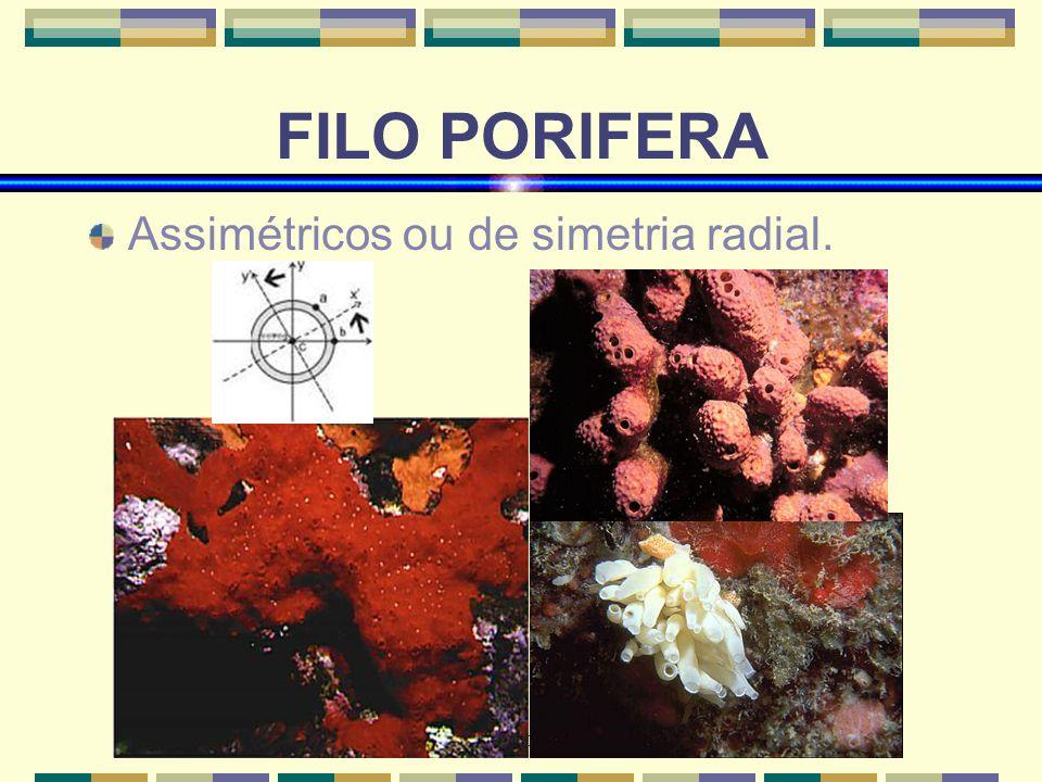 www.bioloja.com FILO PORIFERA Assimétricos ou de simetria radial.