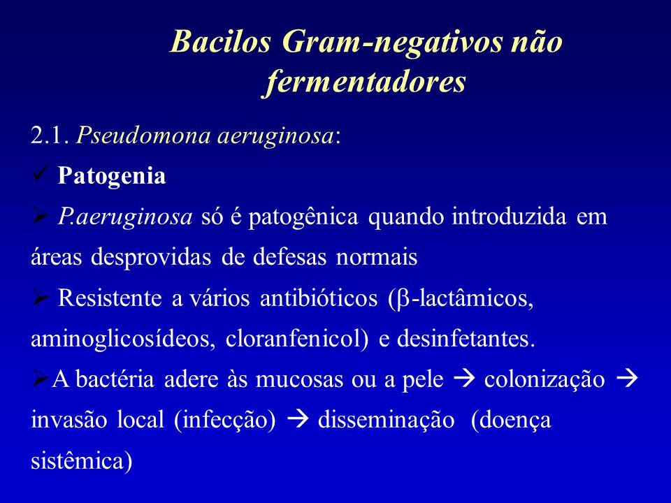 2.1. Pseudomona aeruginosa: Patogenia P.aeruginosa só é patogênica quando introduzida em áreas desprovidas de defesas normais Resistente a vários anti