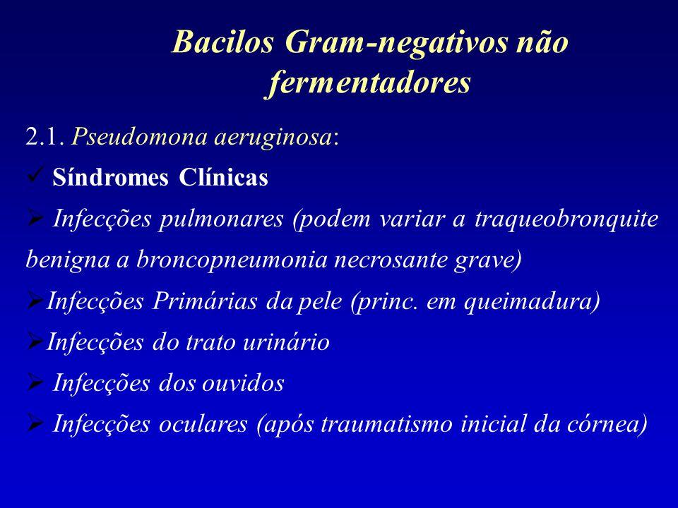 2.1. Pseudomona aeruginosa: Síndromes Clínicas Infecções pulmonares (podem variar a traqueobronquite benigna a broncopneumonia necrosante grave) Infec
