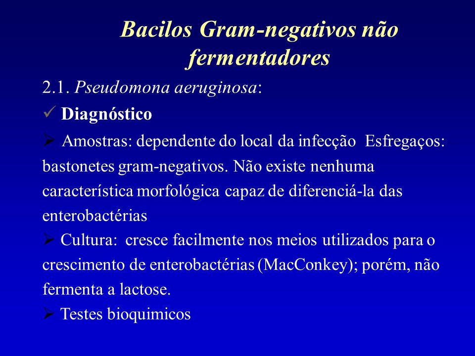 2.1. Pseudomona aeruginosa: Diagnóstico Amostras: dependente do local da infecção Esfregaços: bastonetes gram-negativos. Não existe nenhuma caracterís