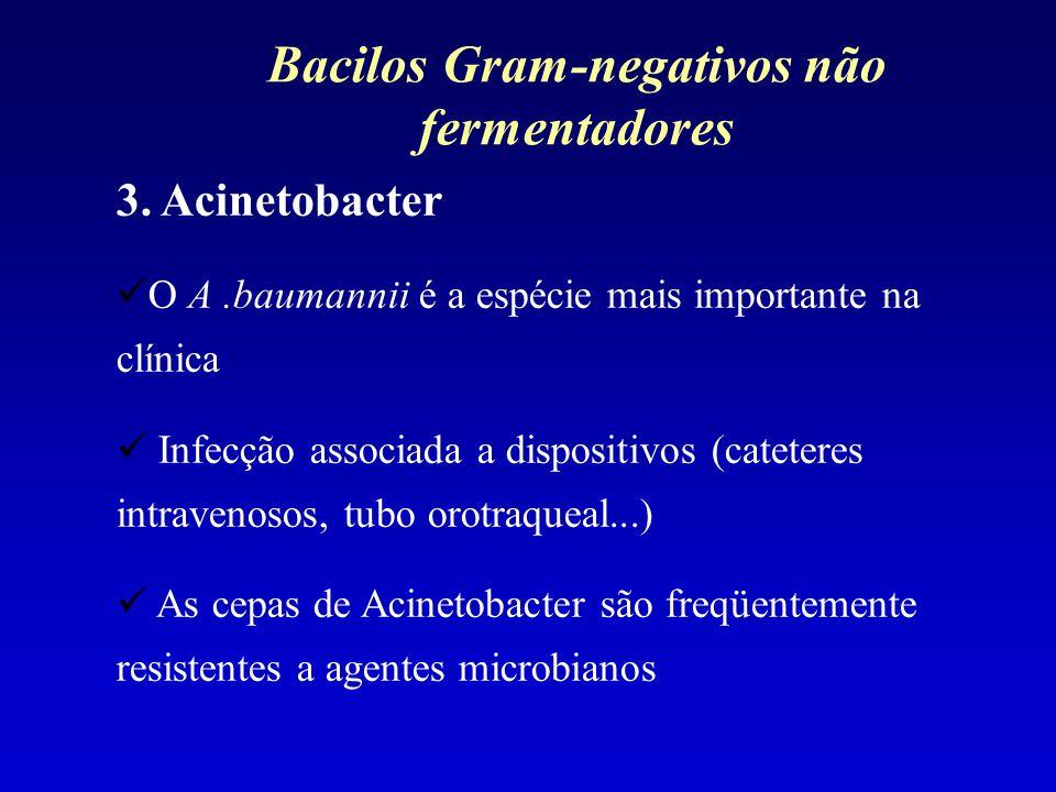 3. Acinetobacter O A.baumannii é a espécie mais importante na clínica Infecção associada a dispositivos (cateteres intravenosos, tubo orotraqueal...)