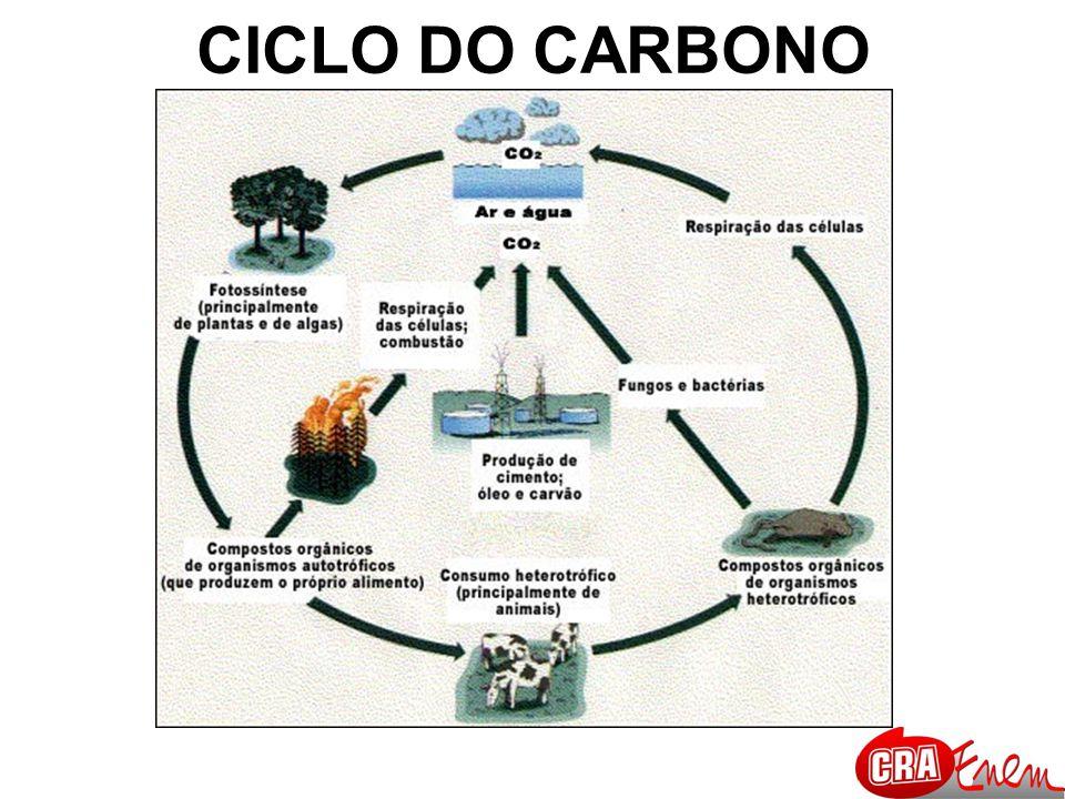 BIODIESEL Combustível renovável derivado de óleos vegetais, como girassol, mamona, soja, babaçu e demais oleaginosas, ou de gorduras animais, usado em motores a diesel, em qualquer concentração de mistura com o diesel.