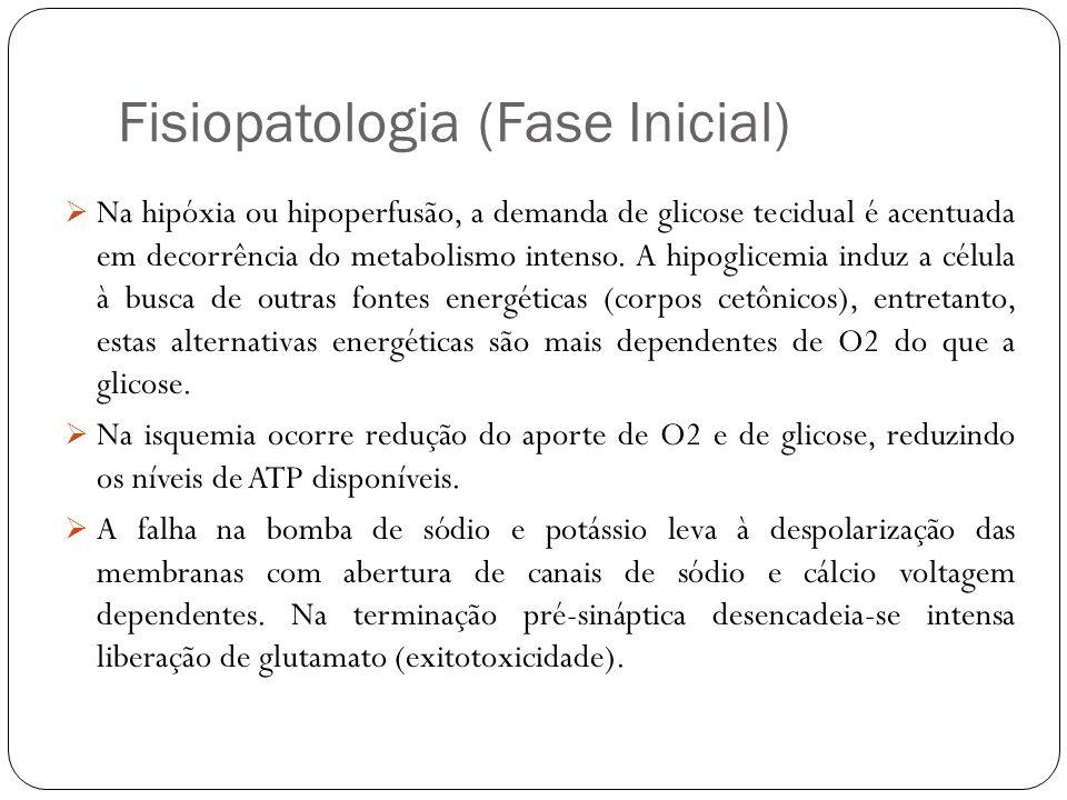 Fisiopatologia (Fase Inicial) Na hipóxia ou hipoperfusão, a demanda de glicose tecidual é acentuada em decorrência do metabolismo intenso. A hipoglice