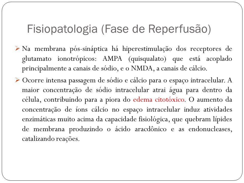 Fisiopatologia (Fase de Reperfusão) Na membrana pós-sináptica há hiperestimulação dos receptores de glutamato ionotrópicos: AMPA (quisqualato) que est