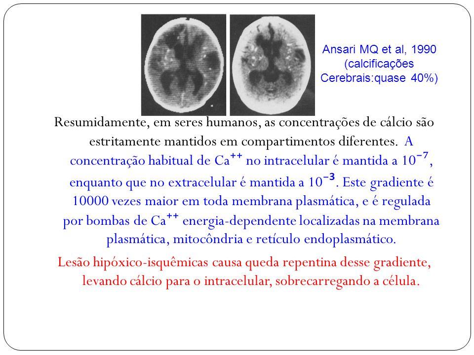 Resumidamente, em seres humanos, as concentrações de cálcio são estritamente mantidos em compartimentos diferentes. A concentração habitual de Ca no i