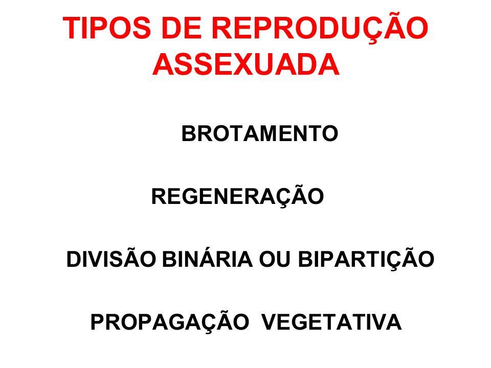 TIPOS DE REPRODUÇÃO ASSEXUADA BROTAMENTO REGENERAÇÃO DIVISÃO BINÁRIA OU BIPARTIÇÃO PROPAGAÇÃO VEGETATIVA