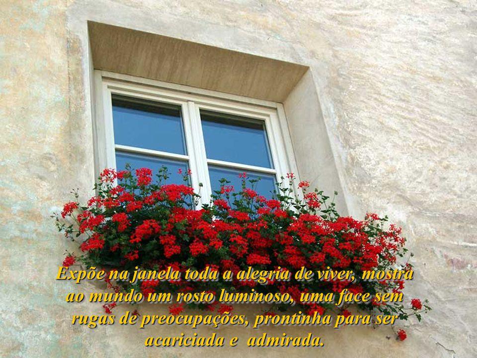 Desenha um horizonte além da tua janela, exagera nas cores e entremeia alegria entre folhas. Floresce todos os campos que tua vista alcança e, depois,