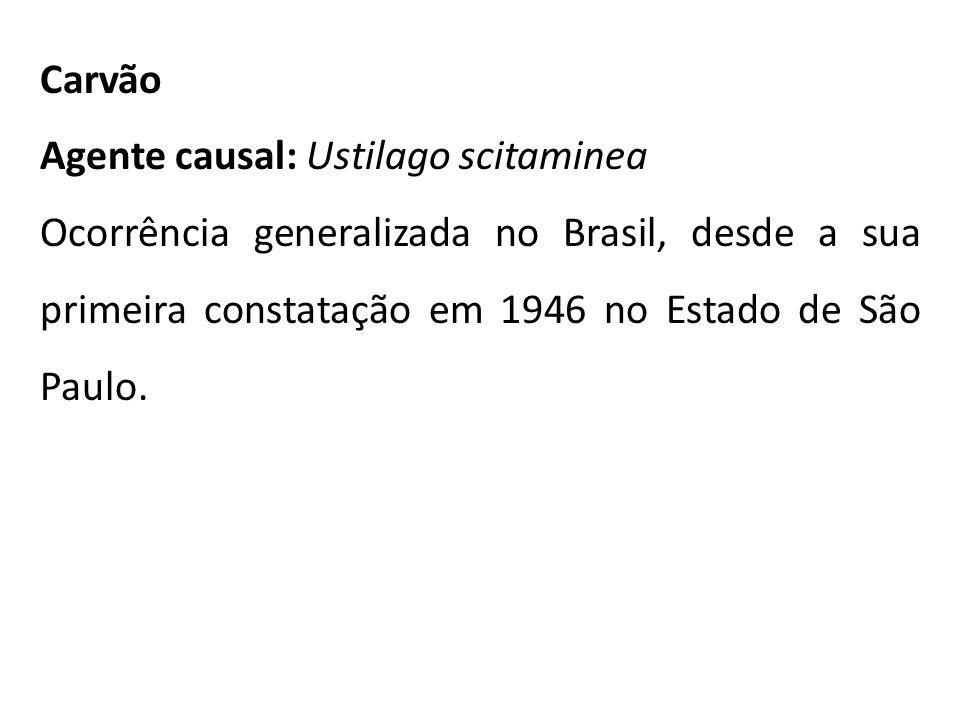Carvão Agente causal: Ustilago scitaminea Ocorrência generalizada no Brasil, desde a sua primeira constatação em 1946 no Estado de São Paulo.