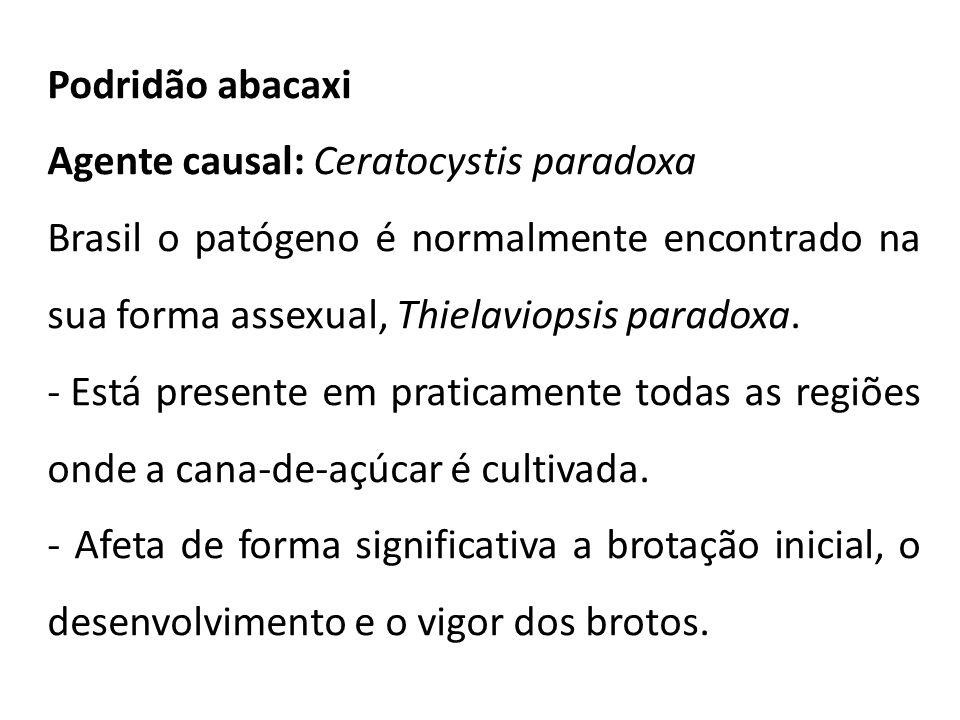 Podridão abacaxi Agente causal: Ceratocystis paradoxa Brasil o patógeno é normalmente encontrado na sua forma assexual, Thielaviopsis paradoxa. - Está