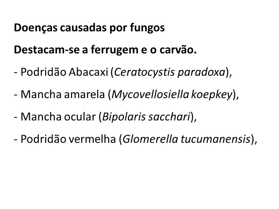 - Podridão de Fusarium - Pokkah-Boeng (Fusarium moniliforme e Fusarium subglutinans ), - Podridões de raízes (Complexos de Pythium) -Podridão de Marasmius (Marasmius sacchari)