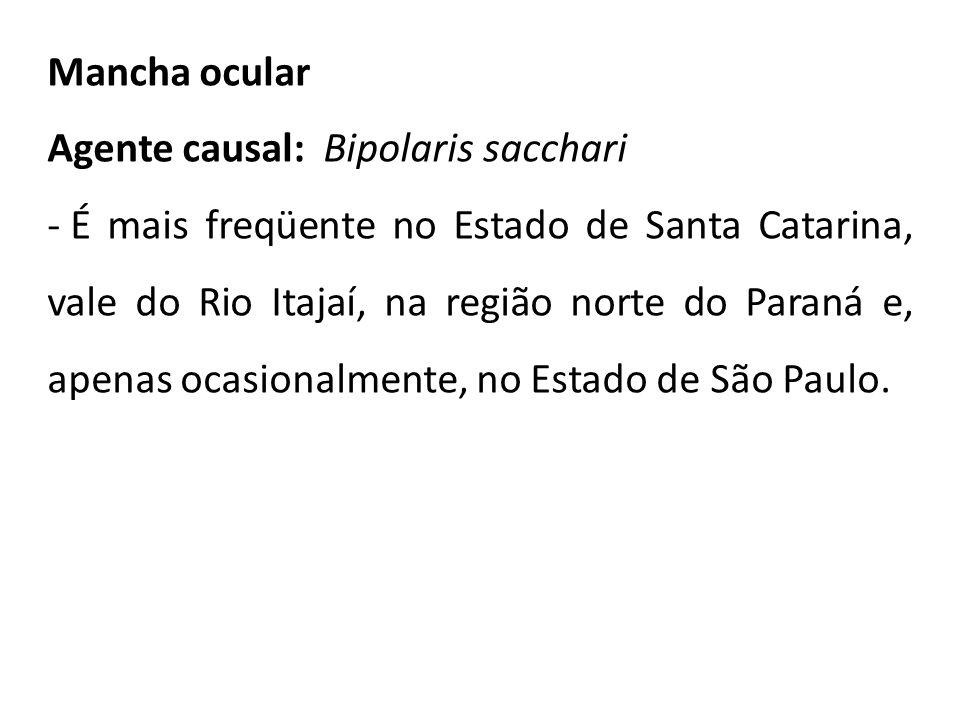 Mancha ocular Agente causal: Bipolaris sacchari - É mais freqüente no Estado de Santa Catarina, vale do Rio Itajaí, na região norte do Paraná e, apena