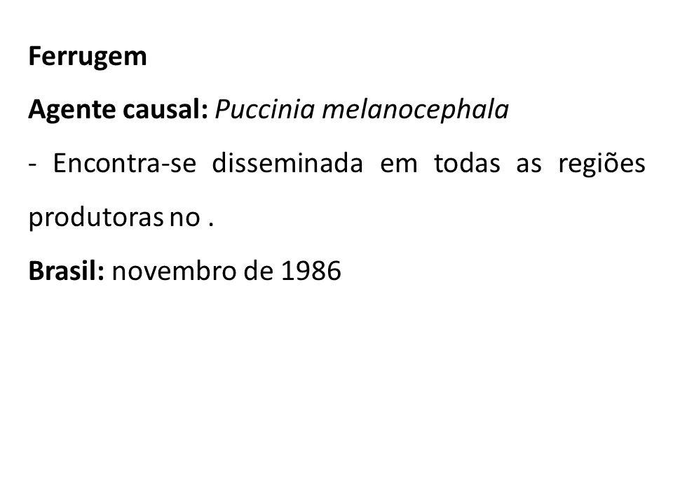 Ferrugem Agente causal: Puccinia melanocephala - Encontra-se disseminada em todas as regiões produtoras no. Brasil: novembro de 1986
