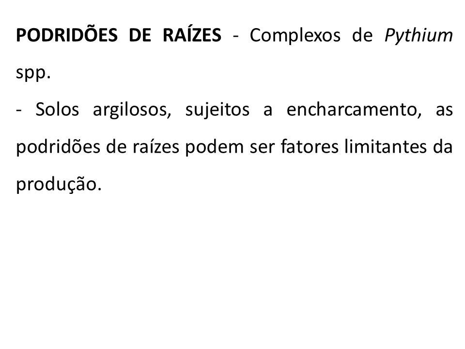 PODRIDÕES DE RAÍZES - Complexos de Pythium spp. - Solos argilosos, sujeitos a encharcamento, as podridões de raízes podem ser fatores limitantes da pr