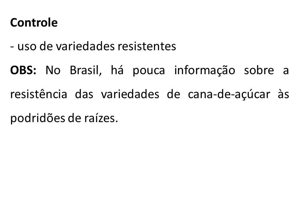 Controle - uso de variedades resistentes OBS: No Brasil, há pouca informação sobre a resistência das variedades de cana-de-açúcar às podridões de raíz