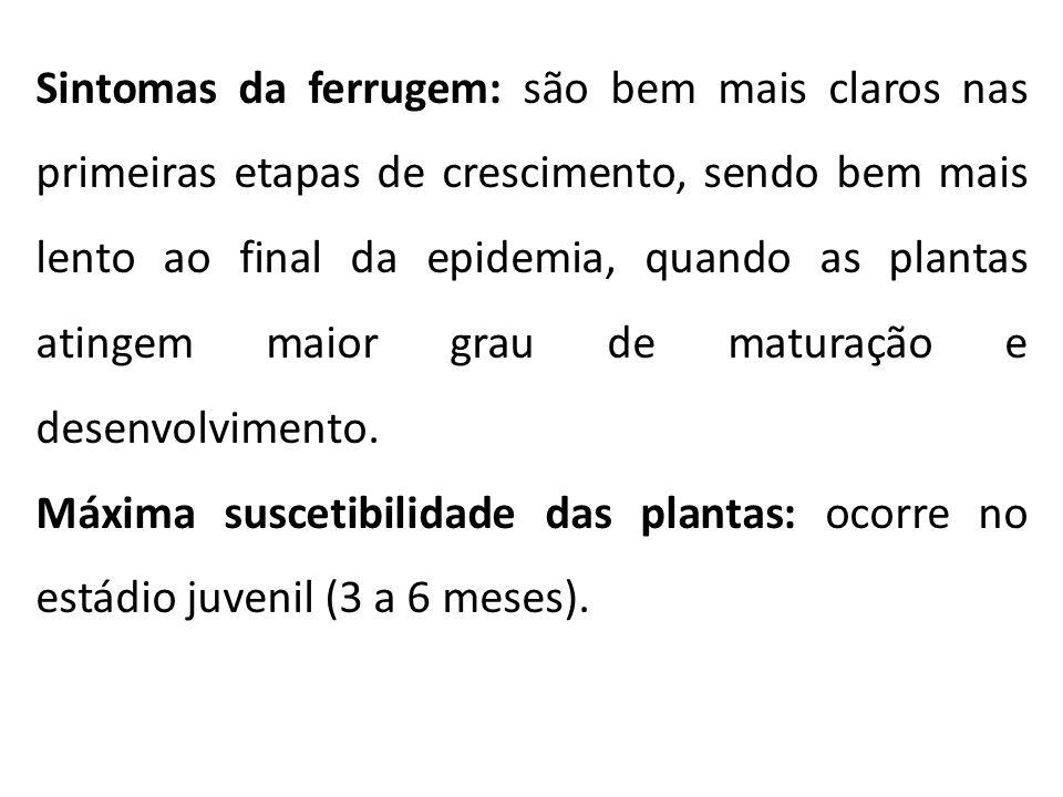 Sintomas da ferrugem: são bem mais claros nas primeiras etapas de crescimento, sendo bem mais lento ao final da epidemia, quando as plantas atingem ma