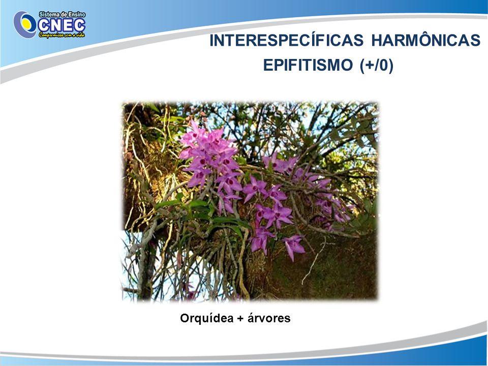 INTERESPECÍFICAS HARMÔNICAS EPIFITISMO (+/0) Orquídea + árvores