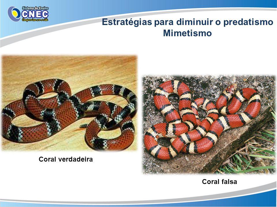 Estratégias para diminuir o predatismo Mimetismo Cores de advertência Coral falsa Coral verdadeira
