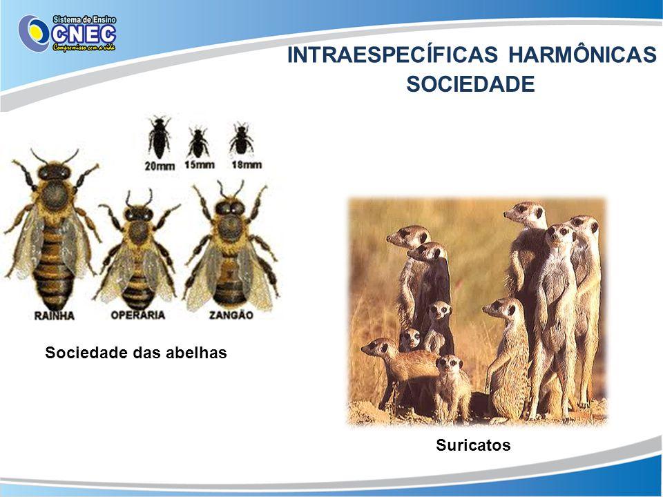Sociedade das abelhas Suricatos INTRAESPECÍFICAS HARMÔNICAS SOCIEDADE
